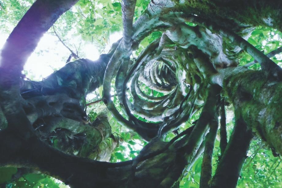 Costa-Rica-Trees