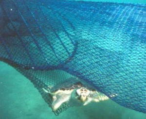 sea-turtle ted escape