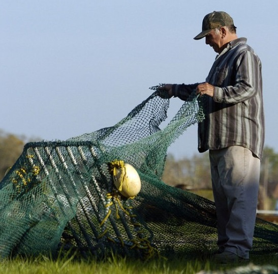 shrimper checking ted