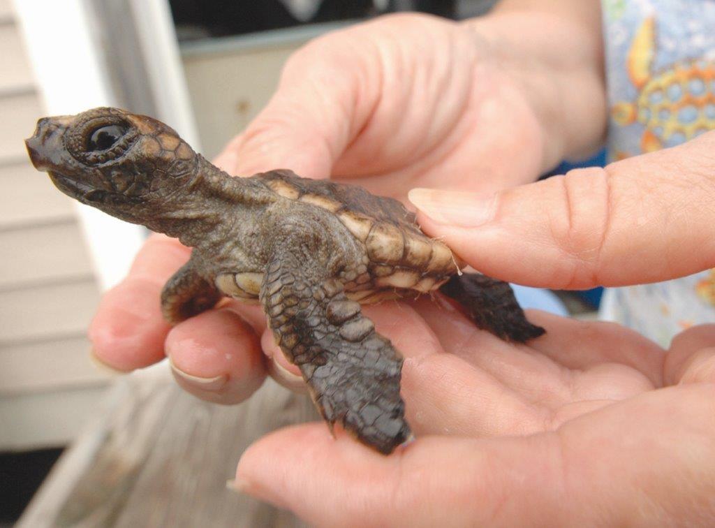 Sea Turtle Teen
