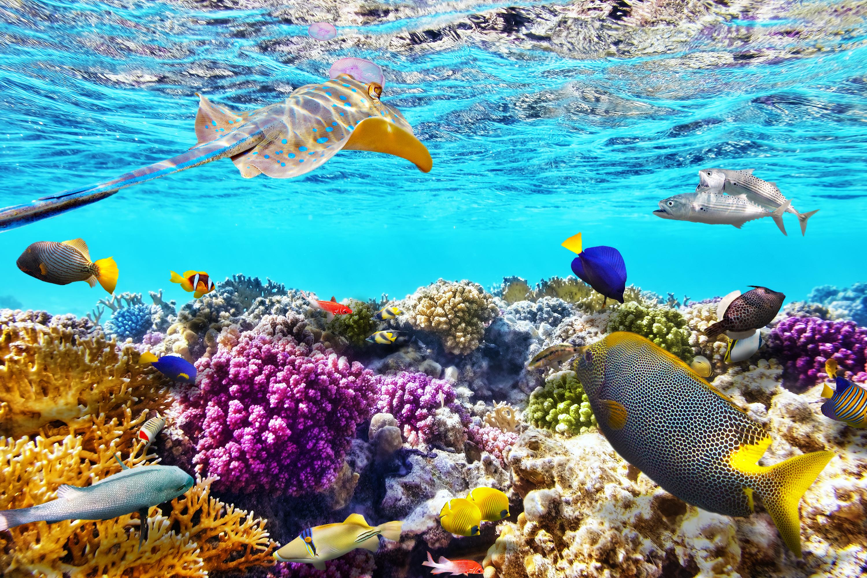 Great barrier reef sea turtle camp - Great barrier reef desktop background ...